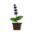 lavender flowers icon image vector image