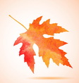 Orange watercolor maple leaf vector image