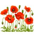 spring flowers poppy vector image