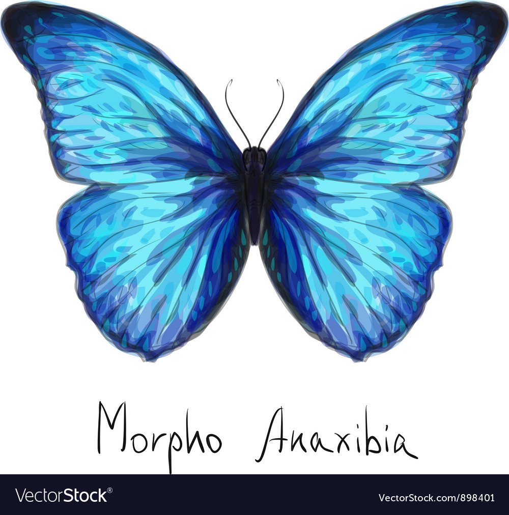 Butterfly watercolor vector