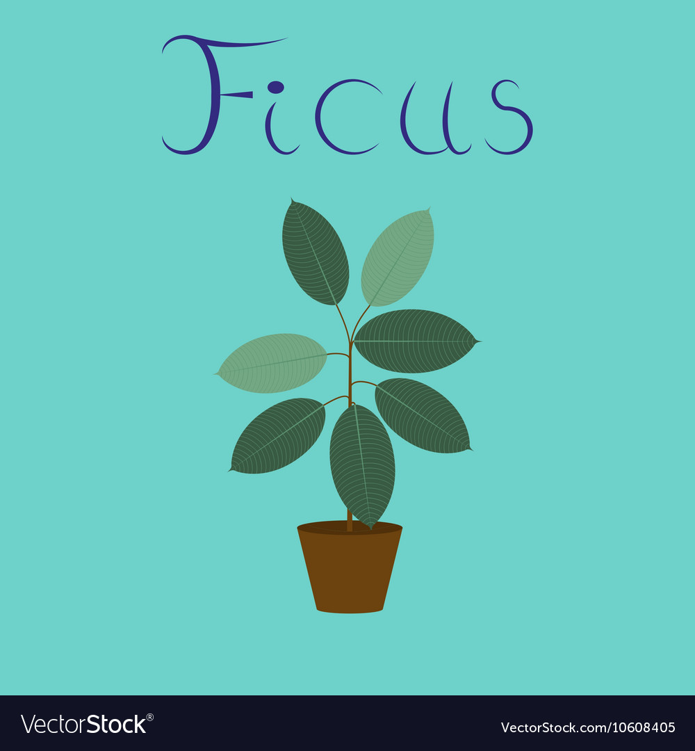 Flat on background plant ficus vector