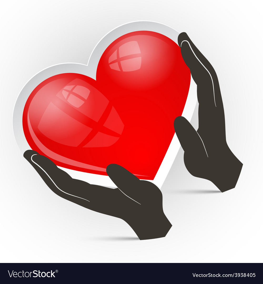Heart in hands isolated on white background vector