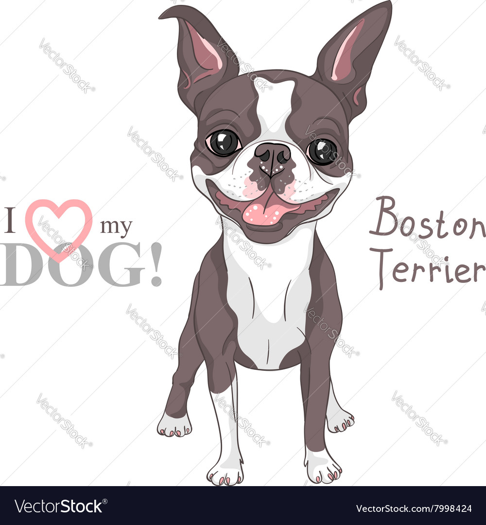 Sketch dog boston terrier breed smiling vector