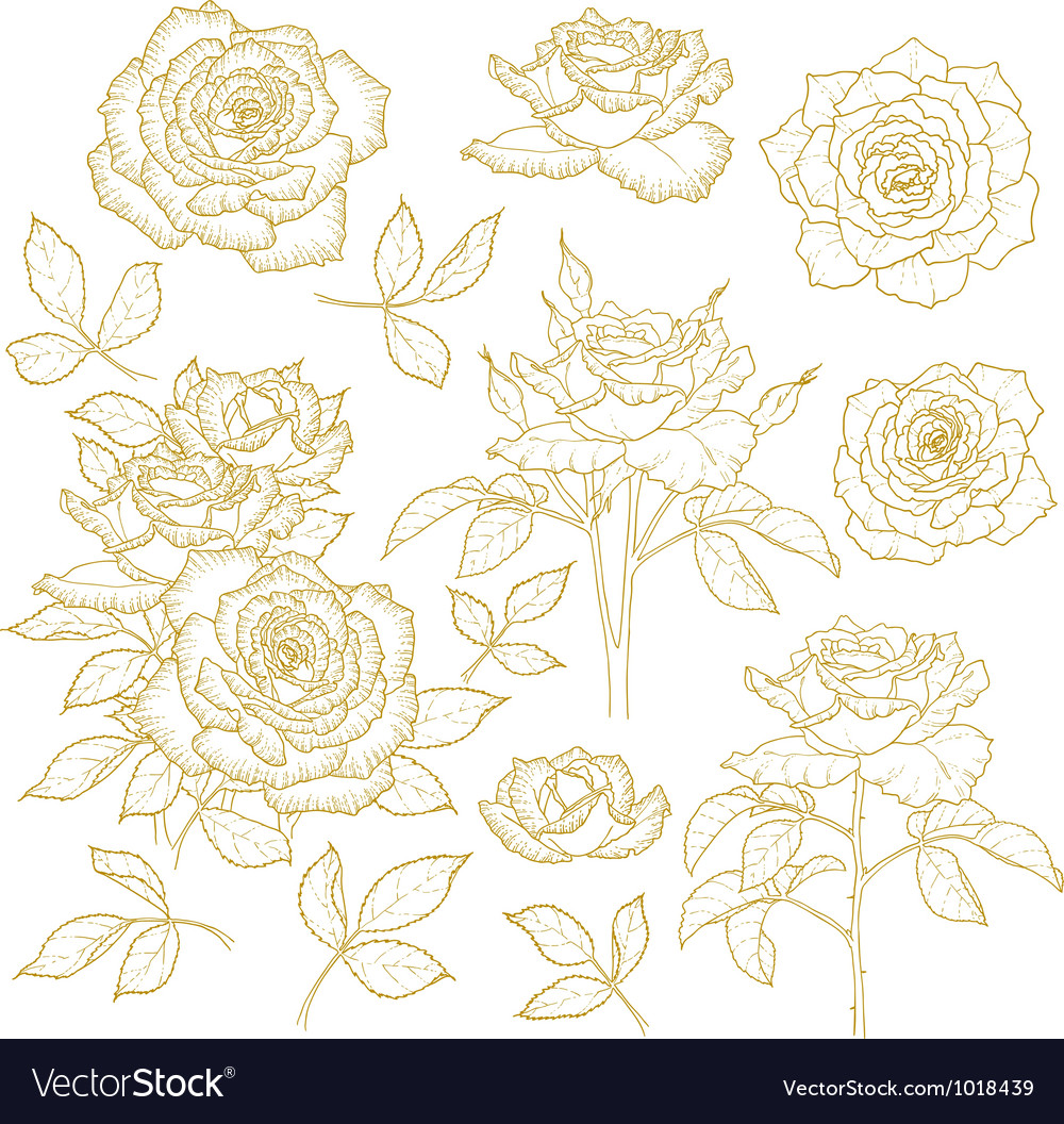Set of onecolored outlined roses vector