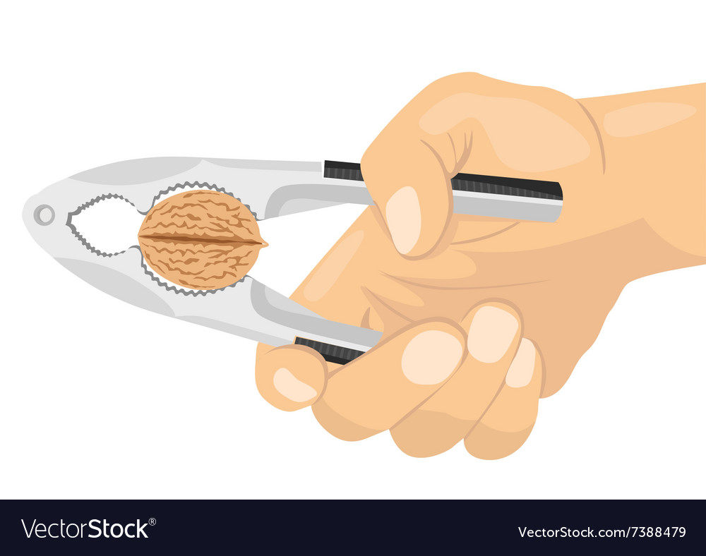 Hand using a nutcracker to crack a nut vector