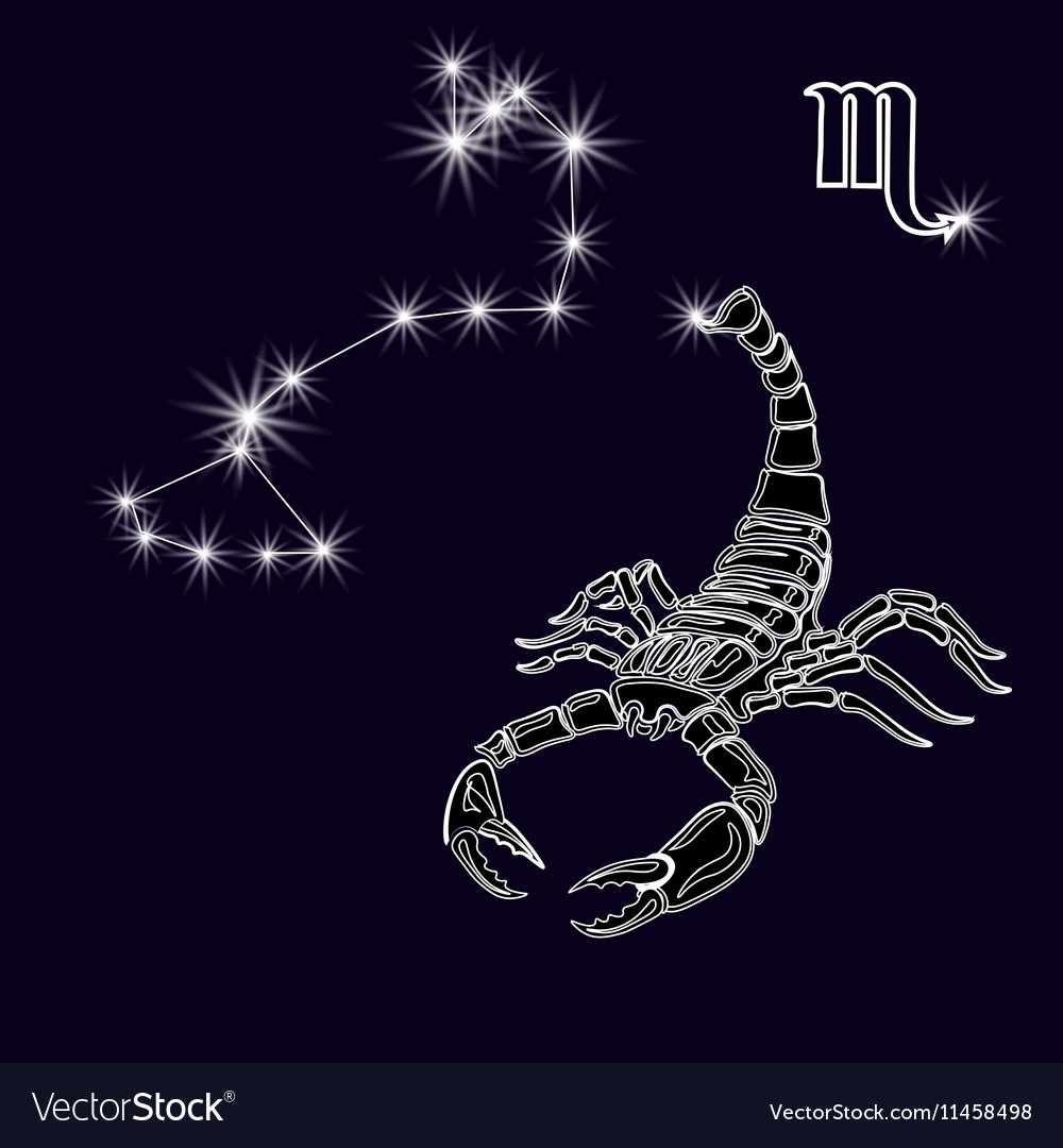 Constellation scorpius white scorpion zodiac vector