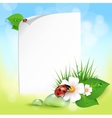 grass flowers dew drops ladybug vector image
