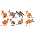 Kangaroo in different poses vector image