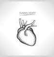 human heart sign isolated internal organ anatomy vector image