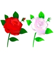 Roses red and white vector image