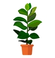 Colorful of plant vector image