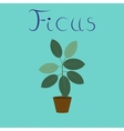 flat on background plant Ficus vector image