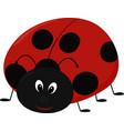 cartoon lady bug vector image