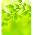 Leaves tree - blurred green vector image vector image