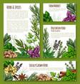 herb spice leaf vegetable sketch banner template vector image