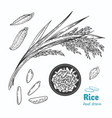 rice hand drawn vector image