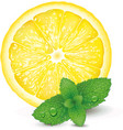 lemon and mint on white background vector image