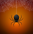 Spider and Cobwebs vector image