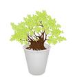 Beautiful Bonsai Tree in A Flower vector image