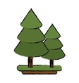 canadian evergreen tree pine sketch vector image