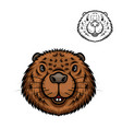 beaver animal head isolated cartoon icon vector image vector image