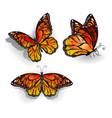 Set of Orange Butterflies Monarchs vector image vector image