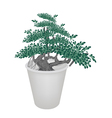 Small Banyan Tree in Flower Pot vector image