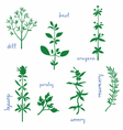 Aromatic Herbs vector image