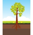 Aple tree with horse vector image