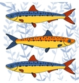 Colorful sardines collection vector image