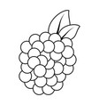 isolated sweet blackberry vector image