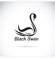black swan on white background wild animals vector image vector image