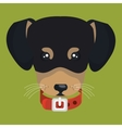 lovely face puppy with collar vector image