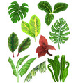 colorful set of tropical leaves vector image