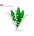 Lily of the valley the national flower of serbia vector image