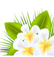 Beautiful Frangipani vector image