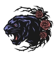 The head of a black panther and roses vector image