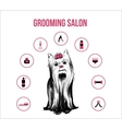 Grooming Pets Salon Concept vector image