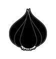 garlic organic food vector image