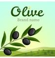 Olive label logo design Olive branch vector image