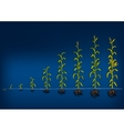 Maize Development Diagram Stages of growth vector image