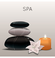 spa with flower candle and stones vector image vector image