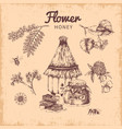 flower honey hand drawn composition vector image
