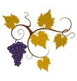 Autumn grape vine vector image vector image