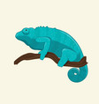 blue chameleon on branch vector image