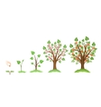 Apple tree growth vector image