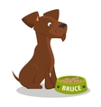 puppy bruce stiting eat food vector image