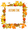 Autumn leaves Decorative frame vector image
