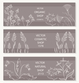 Floral botanical decorative banner vector image