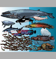 underwater beings vector image